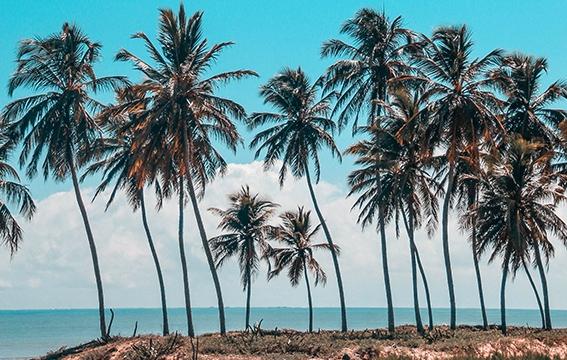 Circuit Guyane paysages naturels